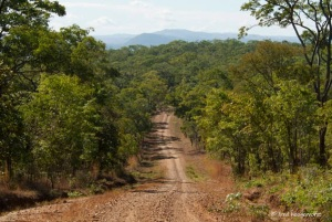A fine looking trail in Mozambique doubling up as a quality road. Photo courtesy of Fred Hoogervorst