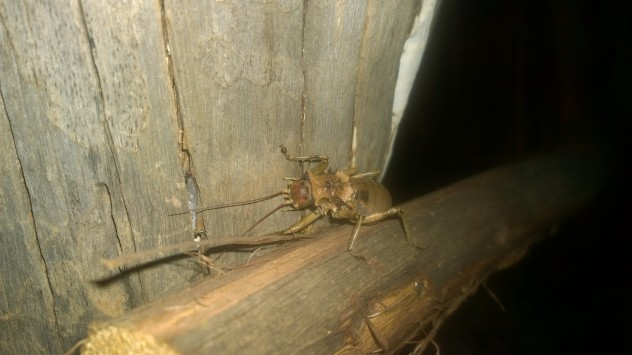 And this fantastic looking bug outside