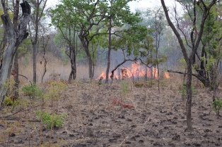 Fire can't travel across recently burned ground