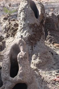 Ancient termite temples